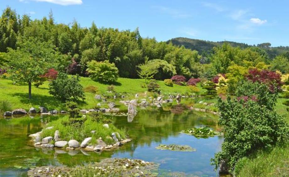 La galerie photos gamm vert for Beaux arbres de jardin