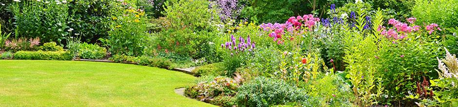 Choisir des bulbes d 39 t pour massif gamm vert for Plante pour massif sans entretien