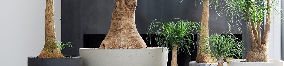 plante interieur rempotage