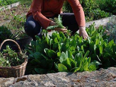 un jardin d 39 aromatiques en p rigord le magazine gamm vert. Black Bedroom Furniture Sets. Home Design Ideas