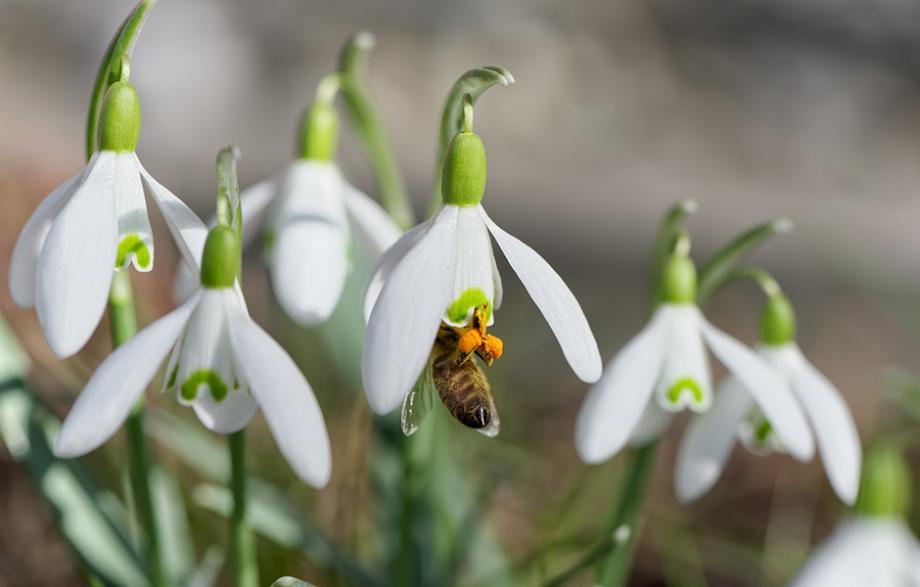 20 fleurs pour les abeilles gamm vert. Black Bedroom Furniture Sets. Home Design Ideas