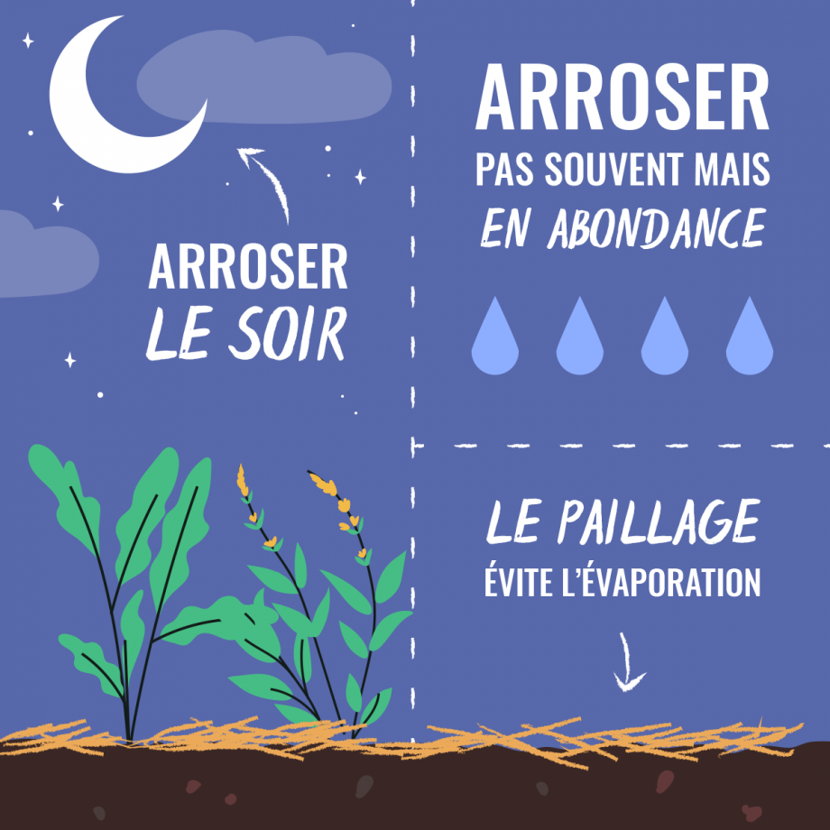 Optimiser l'arrosage