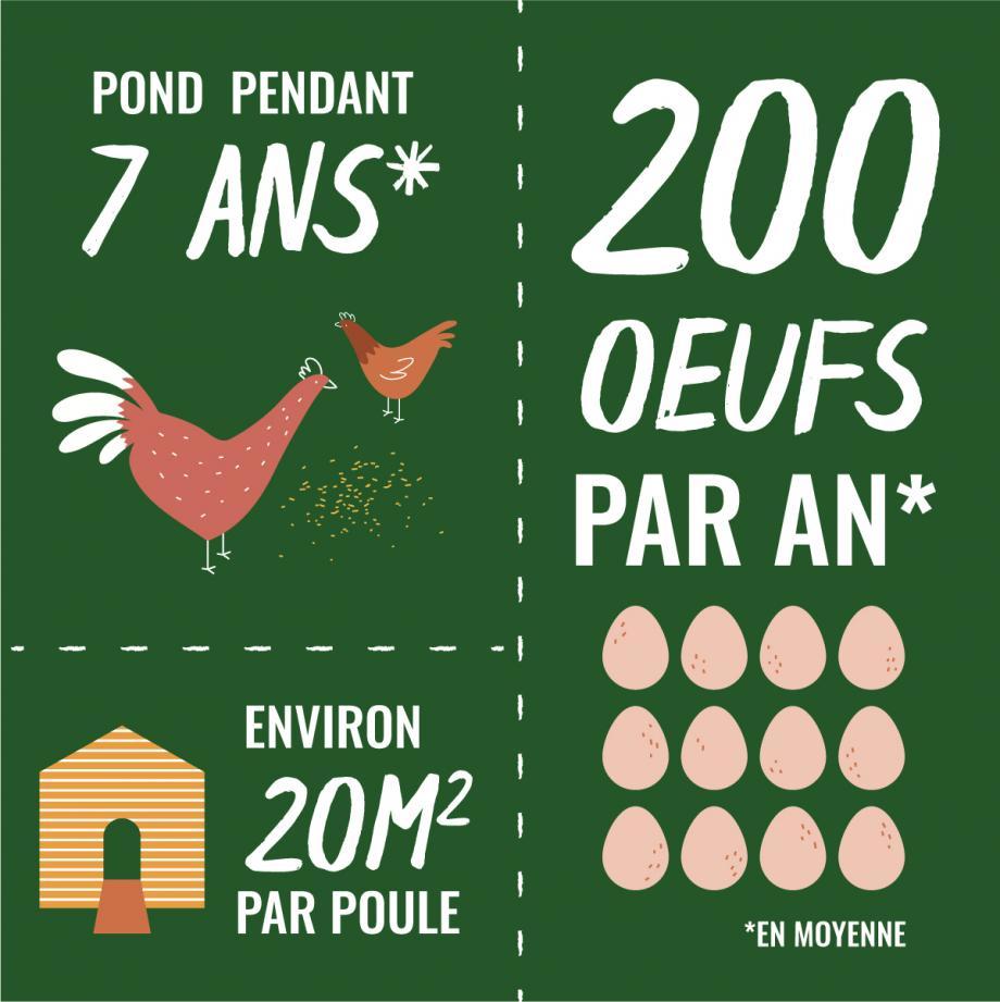 Mettre Des Poules Dans Son Jardin elever des poules pondeuses dans son jardin | gamm vert
