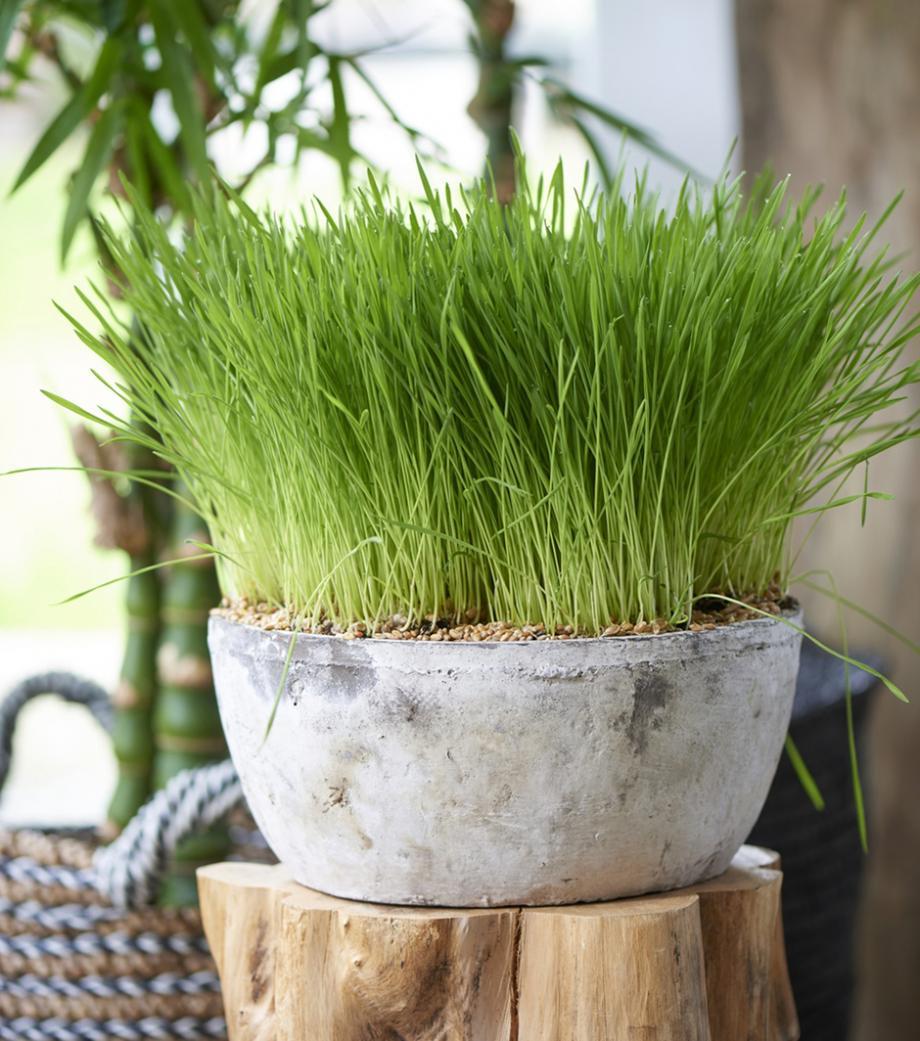 Plante D Intérieur Qui Aime La Chaleur choisir des plantes d'intérieur pour le chien et le chat
