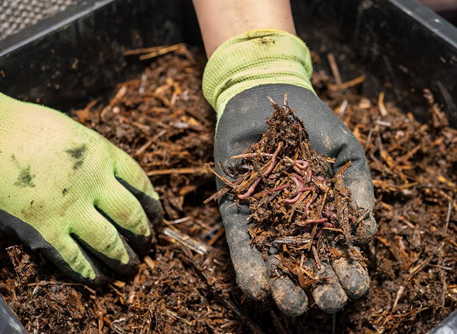 faire du composte maison Un compost riche en vers de terre