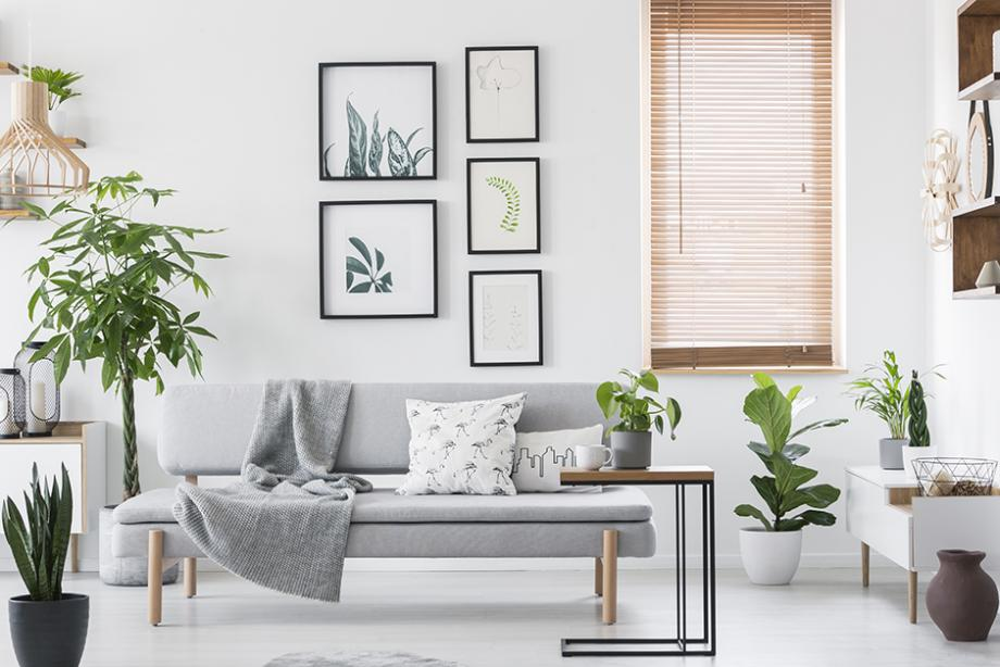 Choisir Ses Plantes D Interieur En Fonction De La Piece De La Maison Gamm Vert