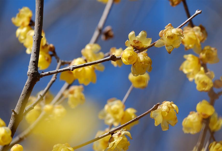 Les 10 Plus Belles Fleurs De L Hiver Gamm Vert