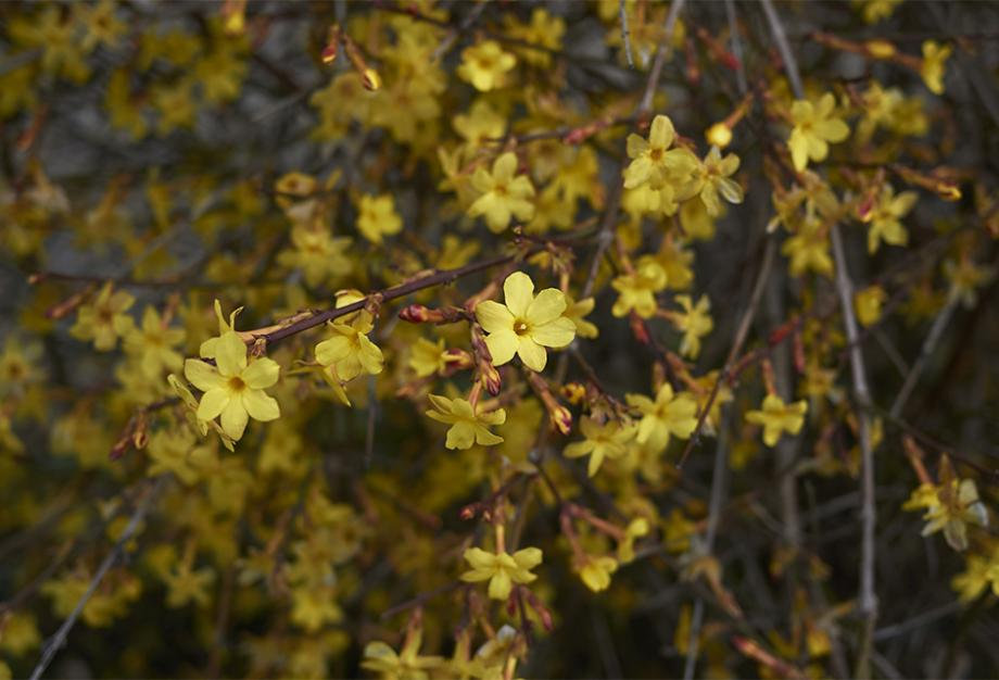 Les 10 plus belles fleurs de l\'hiver | Gamm vert
