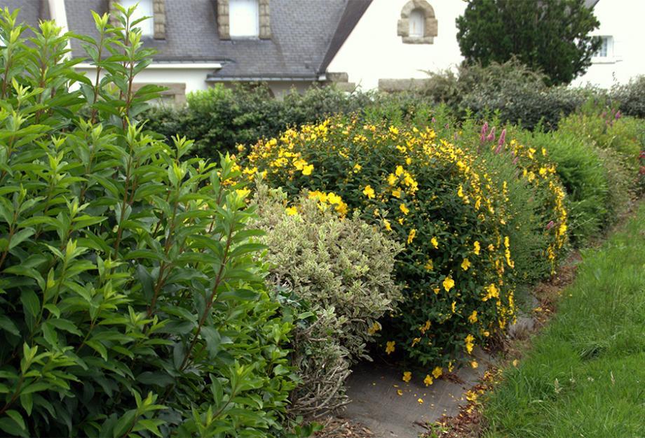 Choisir sa haie de jardin | Gamm vert