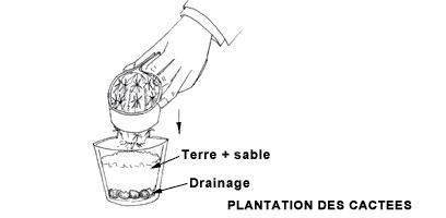 Outil /à Main de Jardin pour Aider les Sols Fertiles Kit Plantes Succulentes Graines de Bonsa/ï Rempotage Ensemble et Soins de Plantation Miniature pour Jardinage de F/ées en Int/érieur Cactus