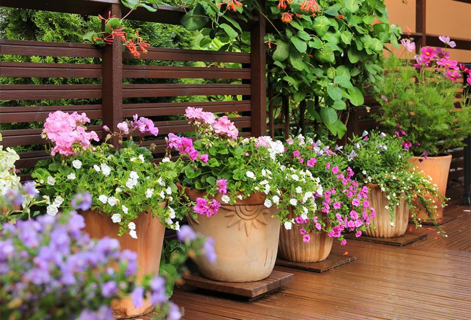4 scènes de balcon ou de jardin spécial sécheresse