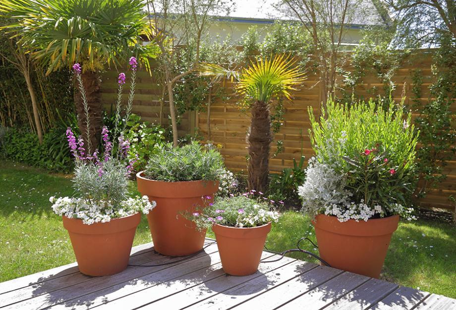 Plante Exterieur En Pot Toute Saison