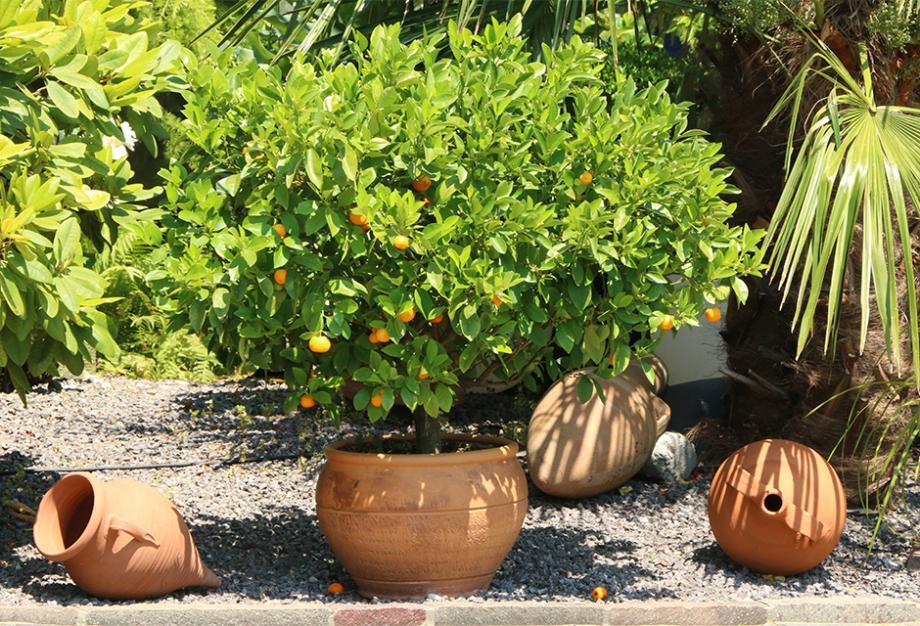 Plante En Pot Exterieur Mi Ombre