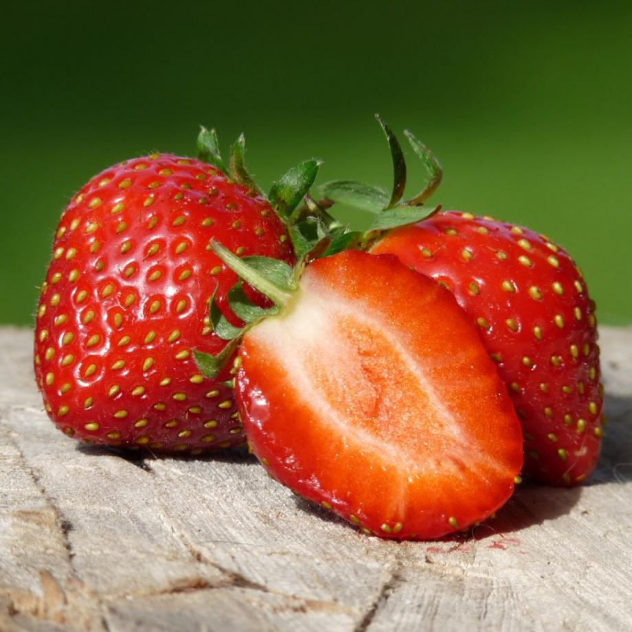 Comment Entretenir Les Fraisiers En Automne les 10 meilleures variétés de fraisiers à cultiver | gamm vert