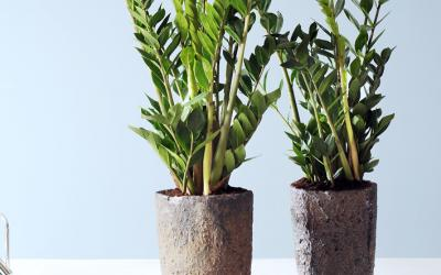 Vos conseils jardinage le magazine gamm vert for Plante interieur originale