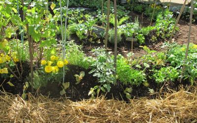 Haricot le magazine gamm vert for Conseil sur les plantes