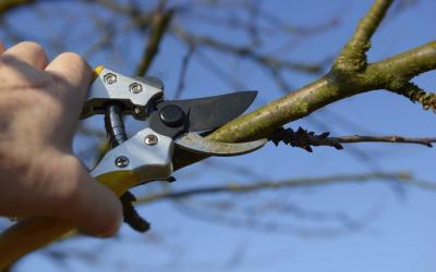 Conseils trucs et astuces gamm vert - Comment tailler un pommier ...