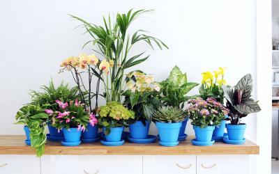 plantes d 39 int rieur entretien culture gamm vert. Black Bedroom Furniture Sets. Home Design Ideas