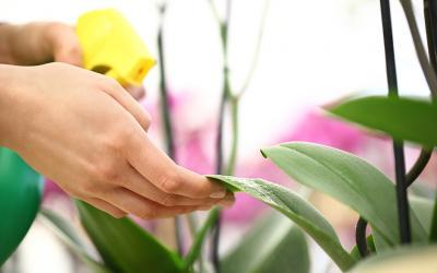Gamm vert - Prendre soin des orchidees ...
