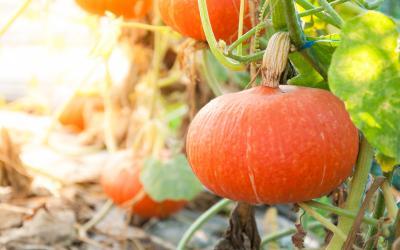 Potager plantes et jardins gamm vert - Que faire au jardin en septembre ...