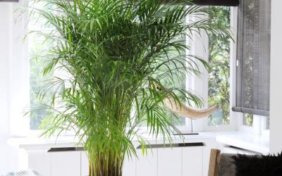 Choisir ses plantes d'intérieur pour la véranda et la ...