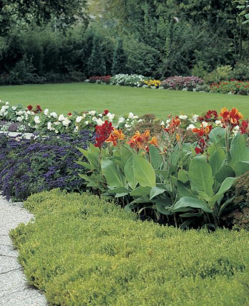 planter et cultiver les bulbes d 39 t dahlia canna gla eul lis agapanthe gamm vert. Black Bedroom Furniture Sets. Home Design Ideas