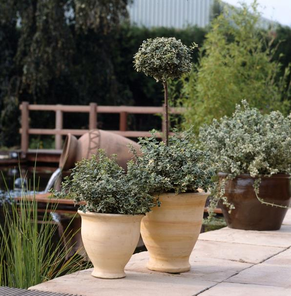 d cor de pots pour terrasse fleurie gamm vert. Black Bedroom Furniture Sets. Home Design Ideas