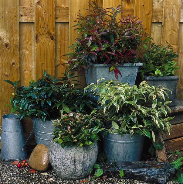 Prot gez les plantes frileuses en pot gamm vert - Conseils jardinage pour les plantes en pots ...