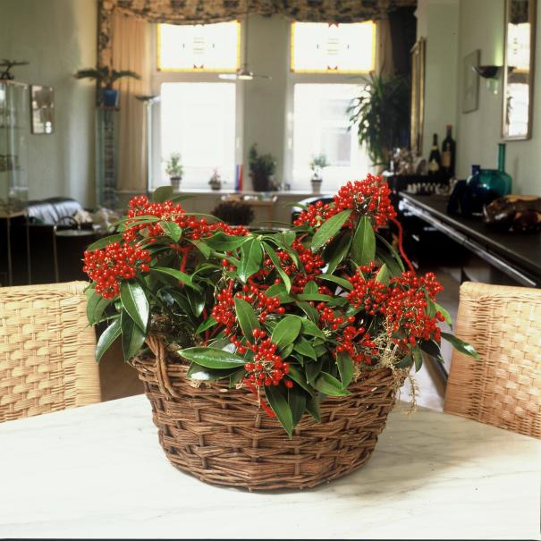 Que faire dans la maison en d cembre le magazine gamm vert - Humidite dans la maison que faire ...