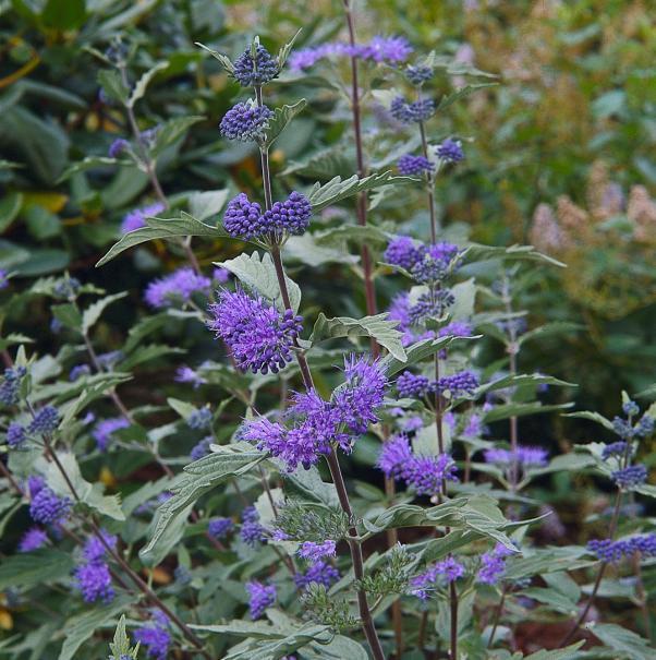 Que faire au jardin d 39 ornement en septembre gamm vert for Plantes ornement jardin