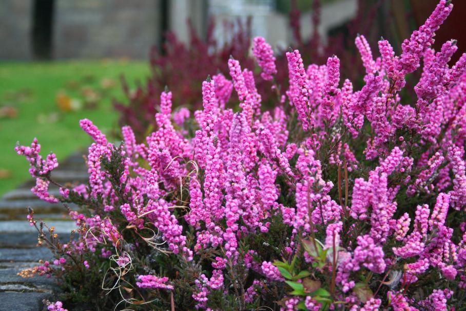 Que faire sur le balcon ou la terrasse en septembre le for Conseil sur les plantes