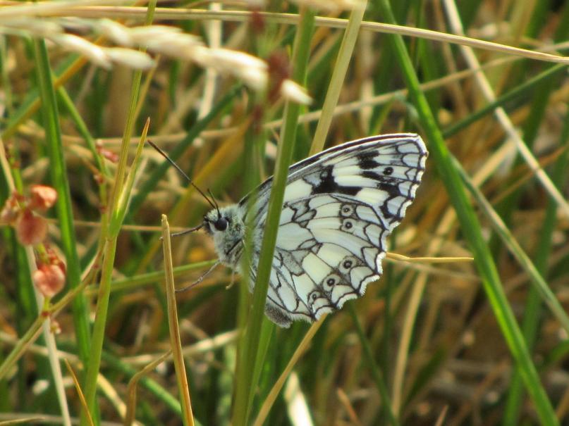 Tout Savoir Sur Les Papillons Gamm Vert