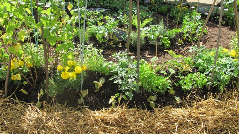 Bien associer les l gumes au potager gamm vert for Association plantes jardin