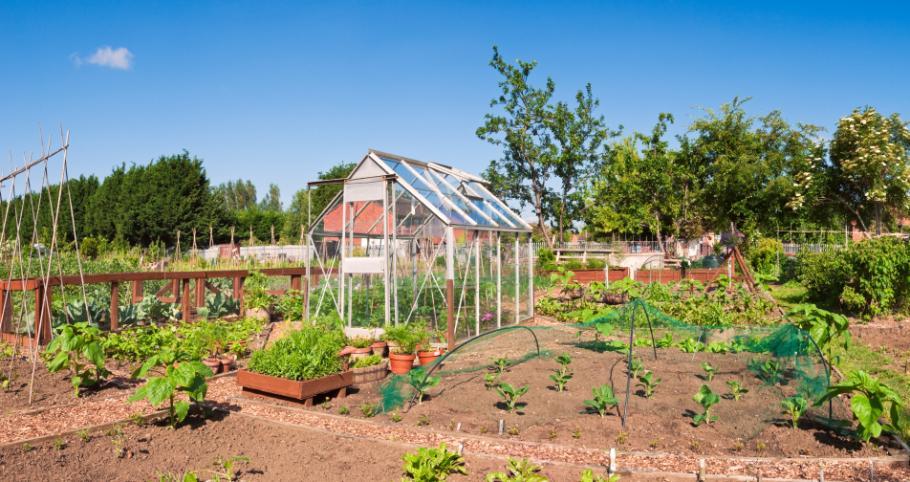 jardin en mai calendrier du potager gamm vert. Black Bedroom Furniture Sets. Home Design Ideas