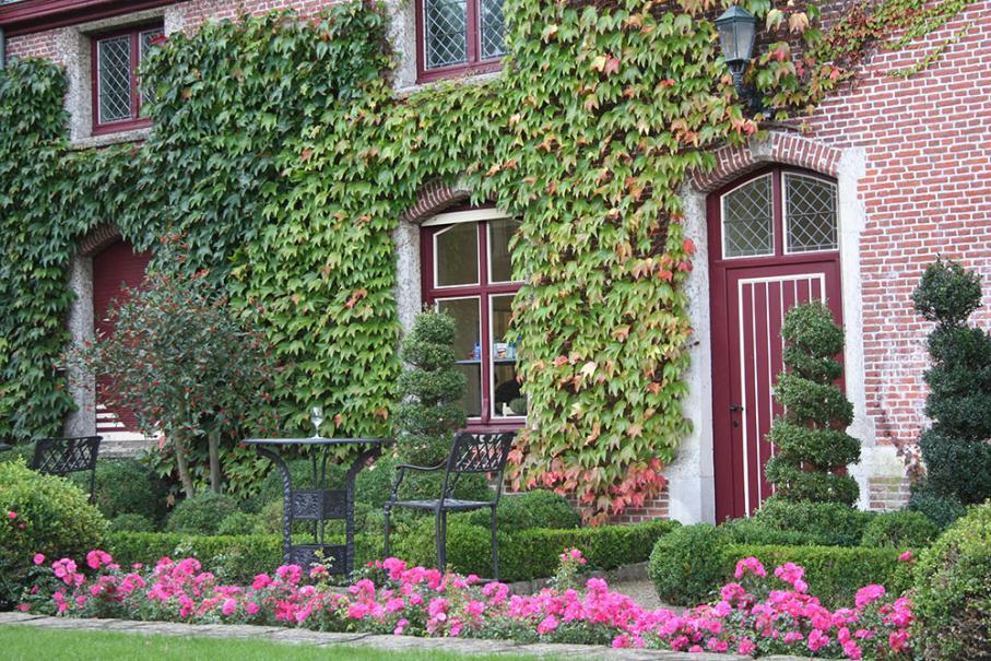 20 plantes grimpantes pour tapisser vos murs en beaut gamm vert. Black Bedroom Furniture Sets. Home Design Ideas
