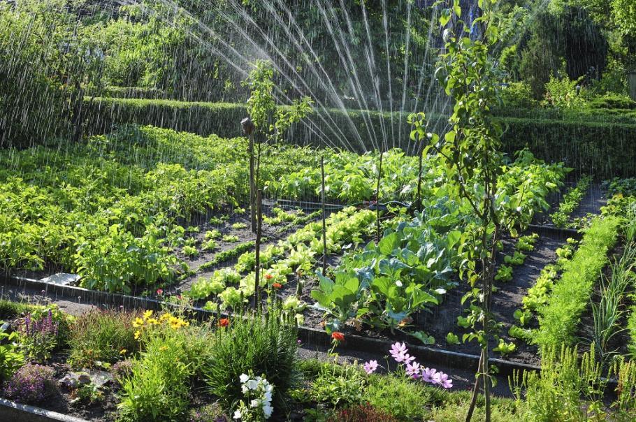 Jardin En Aout Calendrier Du Potager Gamm Vert