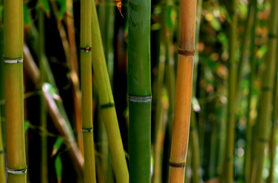 Bambou Plante D Exterieur Gamm Vert