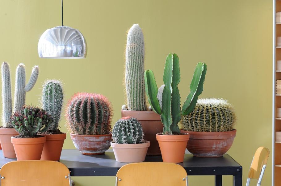 Cactus et plantes grasses entretien rempotage gamm vert for Entretien plantes jardin