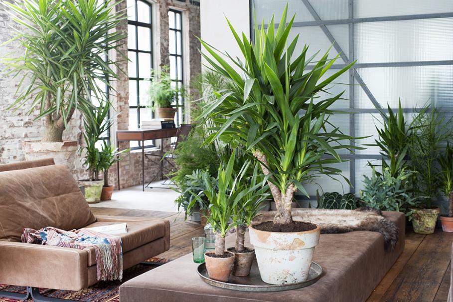 plante interieur entreprise