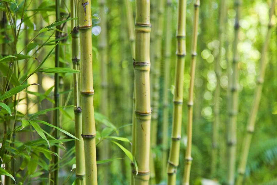Choisir Son Bambou Gamm Vert