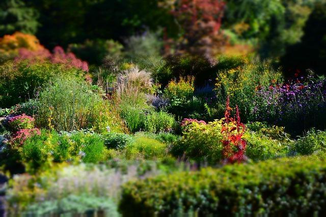 Entretien des plantes vivaces gamm vert for Entretien plantes vivaces