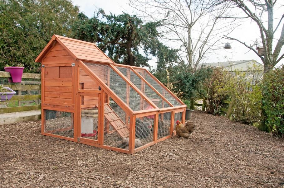 Poules au jardin : que dit la réglementation ? | Gamm vert