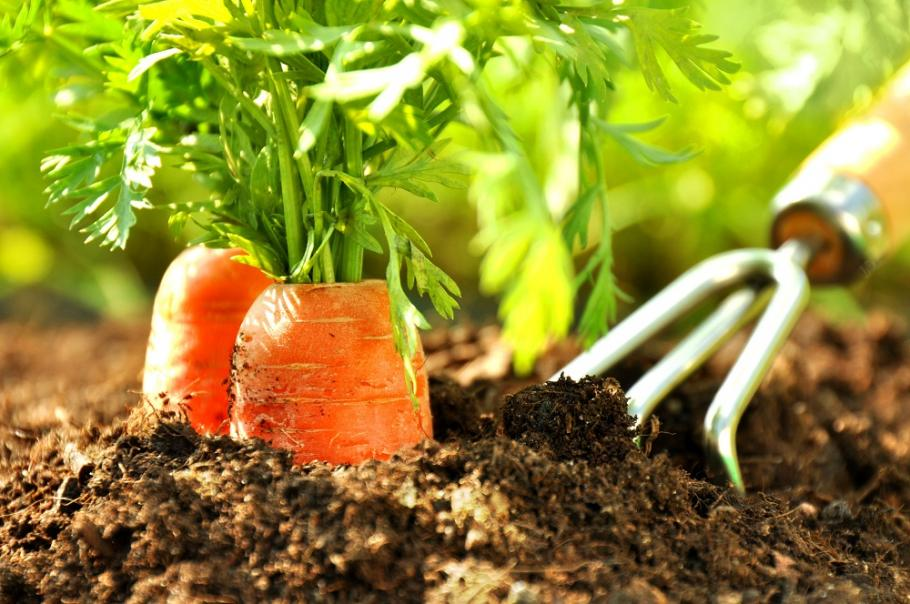 Jardin en octobre calendrier du potager gamm vert for Site de jardinage