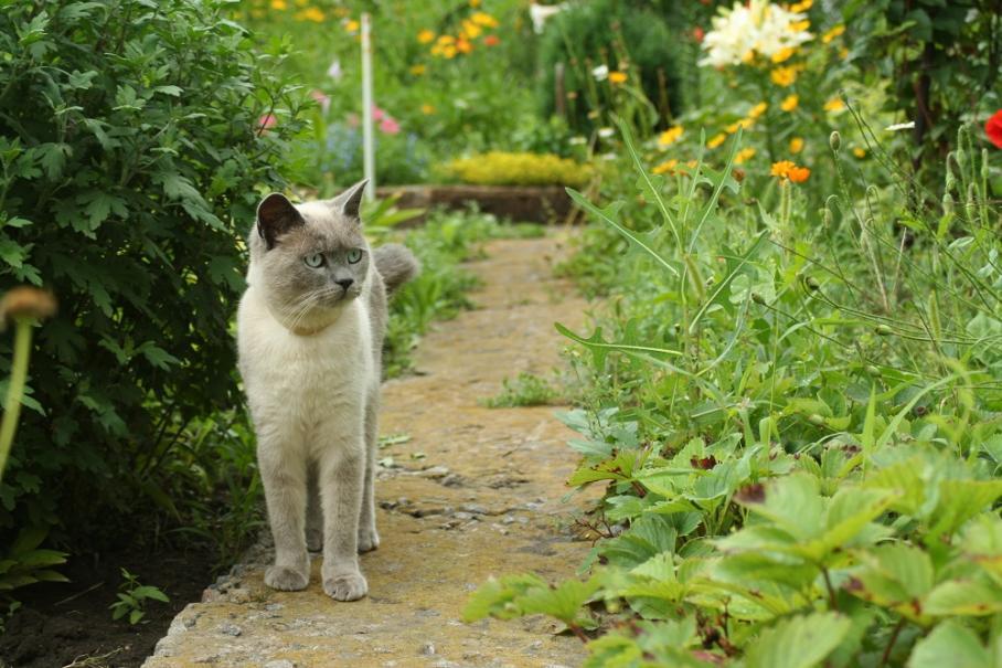 Les chats au jardin gamm vert - Empecher les chats de venir dans le jardin ...