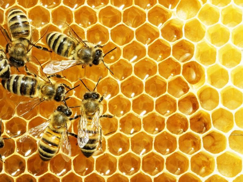 Faites votre propre miel !