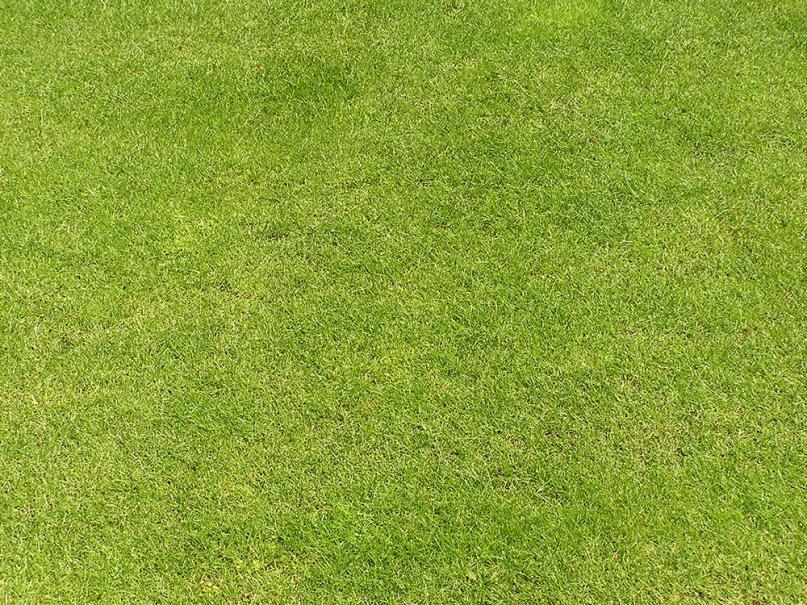 Tout ce que vous vouliez savoir sur le gazon gamm vert for Quand semer son gazon