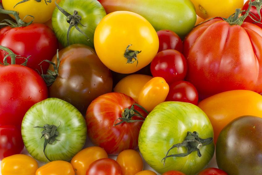 Comment Cultiver La Tomate Cœur De Bœuf Gamm Vert