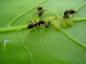 Comment Eliminer Les Fourmis Du Jardin Gamm Vert