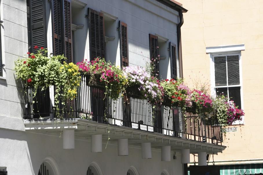 que planter dans une jardini re au soleil gamm vert. Black Bedroom Furniture Sets. Home Design Ideas