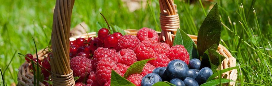 Quand planter les petits fruits ?   Gamm vert